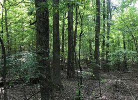 5.29+/-acres Unrestricted with Electric and Water Available at the pavement with available owner financing.
