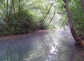 40+/-acres Beautiful Property On Sweetens Cove Road