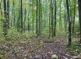 367.46+/-acres surrounded by over 13,000 acres of the Cherokee National Forest.