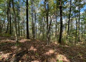 5.58+/-acres wooded bluff tract with breath taking views of the Tennessee Mountains