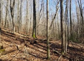 10.4+/-acres nice wooded tract with Creek