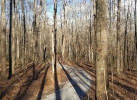 9.93+/-acres Beautiful lakefront property . Very private and secluded.
