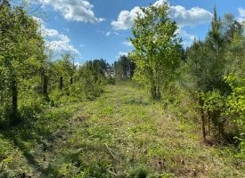 32.65+/-acres mostly cleared property that is private and secluded yet close and conveniant to the City of Cleveland and Chattanooga