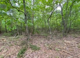 5.02+/-acres wooded property near Franklin State Forest
