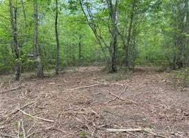 5.03+/-acres wooded property located on the Cumberland Plateau.