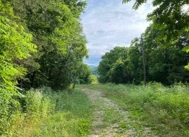 54+/-acres Prime Agricultural property ready to plant crops.