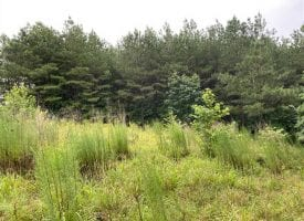 9.5+/-acres in the Beautiful Ridges at Franklin Forest
