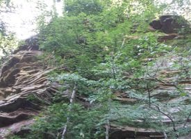 40.22+/-acres Unrestricted secluded property that has beautiful bluff views