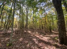 149+/-acres with approximately 3400 feet of bluff frontage overlooking the Sequatchie Cove wilderness area