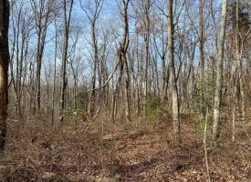 63+/- acres perfect for Hunting or to park a camper and enjoy the nature surrounding you.