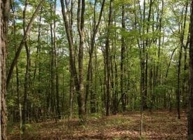 77.64+/-acres Bordering protective State Park